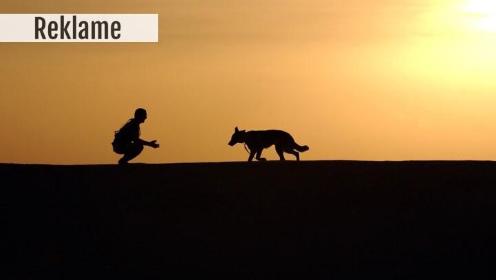 Lad hunden være din daglige motion